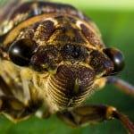eating bugs