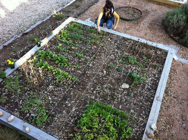 80 sq foot garden