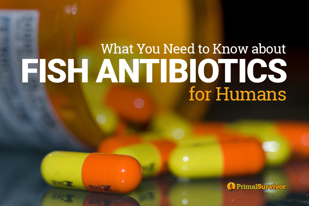 What You Need to Know about Fish Antibiotics for Humans post image