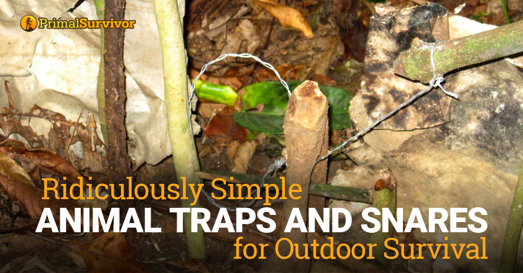 5 Ridiculously Simple Animal Traps and Snares for Outdoor Survival post image