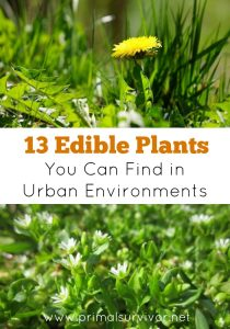 13 Edible Plants You Can Find in Urban Environments