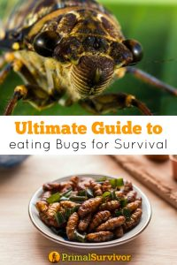 Ultimate Guide to eating bugs for survival
