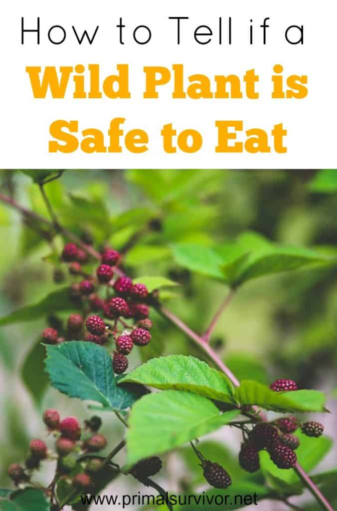 How to tell if a Wild Plant is Safe to Eat