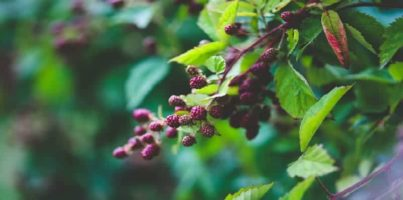 Top Medicinal Plants for Survival Situations
