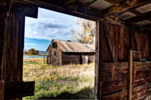 How to Go from Surviving to Homesteading