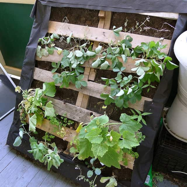How to build a pallet survival garden that will feed your for Pallet veggie garden