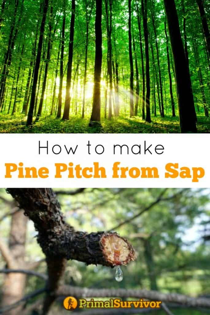 How to make pine pitch from sap