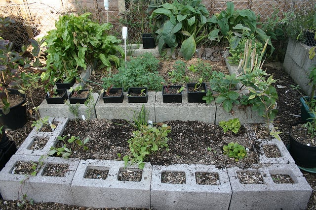 raised bed survival garden