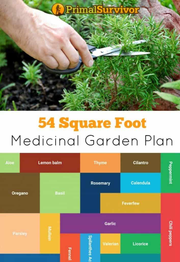 How to Plant a Medicinal Garden