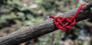 survival knot