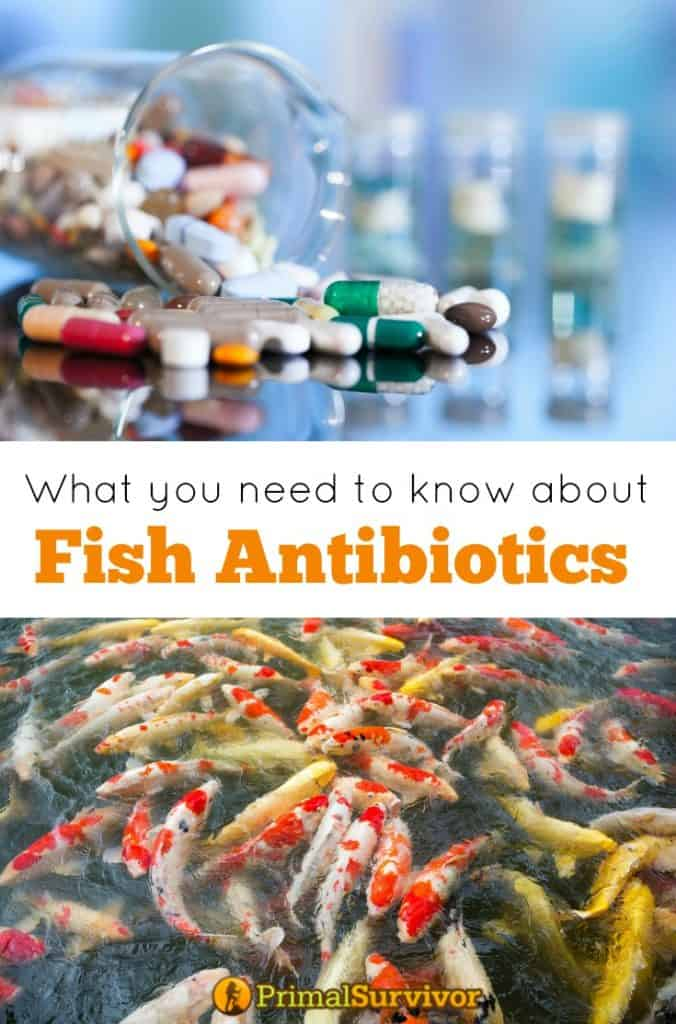 What you need to know about Fish Antibiotics for humans