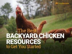 backyard chicken resources