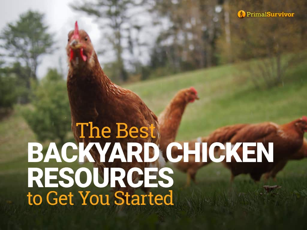 backyard chicken resources