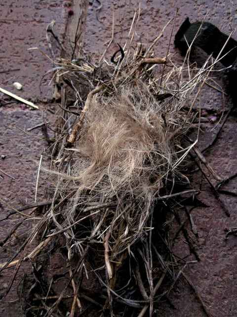 "This is a ""birds nest"" tinder made from dry grass and fibers"