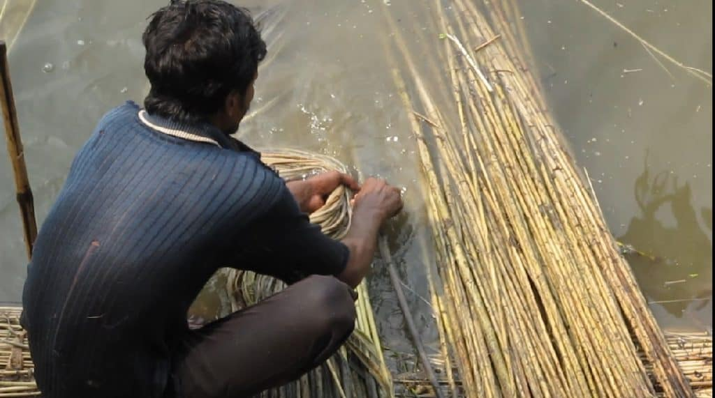 This image shows a man soaking jute to soften it. He then cracks open the tough outer bark to remove the fibers inside. Jute is one of the most common natural rope materials.