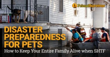 Disaster Preparedness for Pets: How to Keep Your Entire Family Alive when SHTF