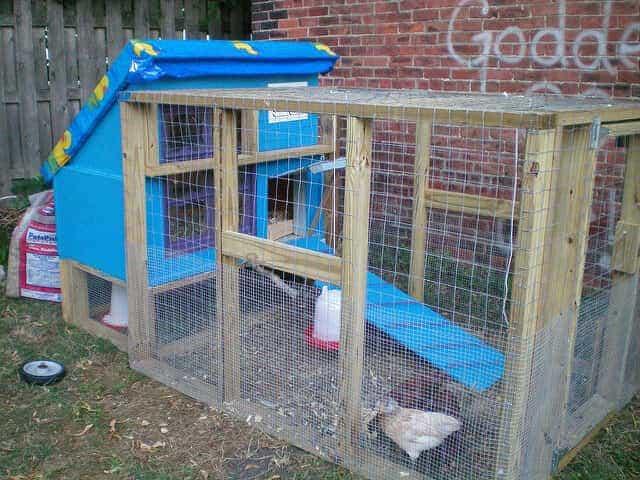 blue small backyard chicken coop