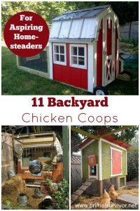 Backyard Chicken Coops for Aspiring Homesteaders