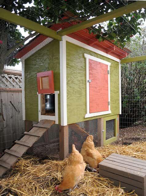 enclosed raised backyard chicken coop idea