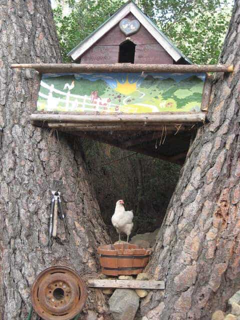 11 Backyard Chicken Coop Ideas For Aspiring Homesteaders