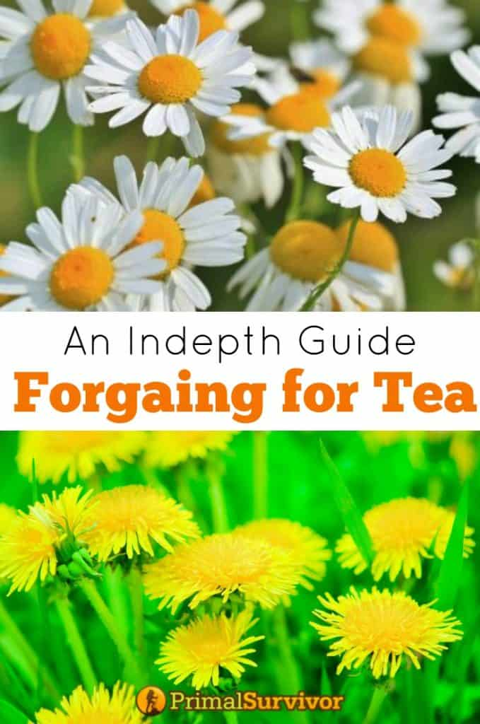 An Indepth Guide Foraging for Tea