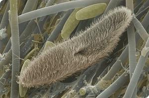 Protozoa magnified