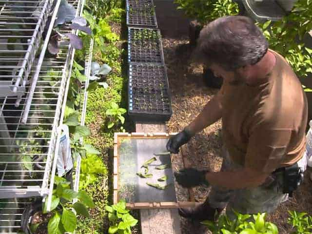 Doomsday preppers garden