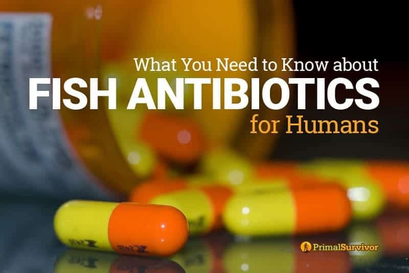 fish antibiotics for humans