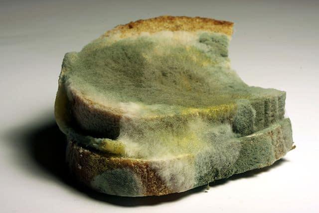 bread mold aka penicillin