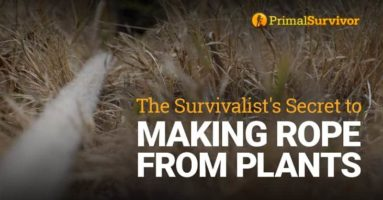 The Survivalist's Secret to Making Rope from Plants