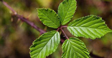 Homemade Natural Remedies for Tackling Diarrhea