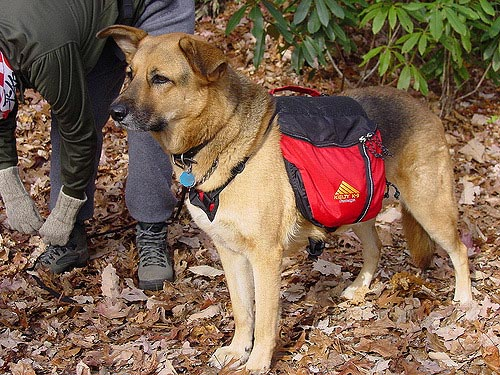 Choosing A Bug Out Bag For Dog