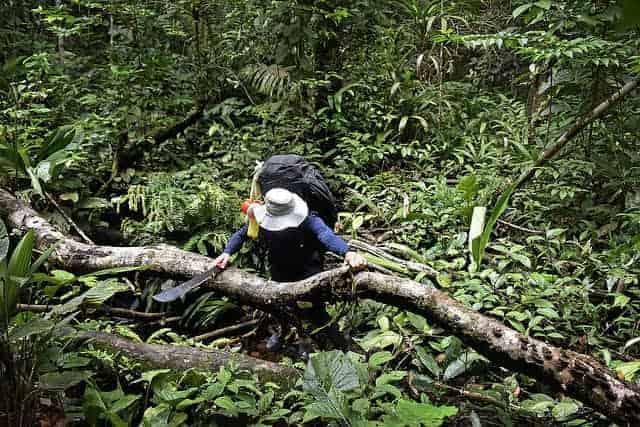 machete jungle survival