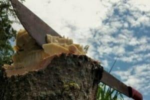 machete tree chopping