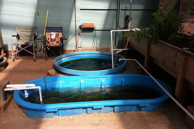 aquaponic garden in DIY greenhouse