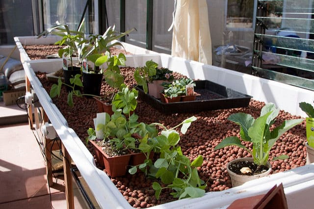 plants for aquaponics