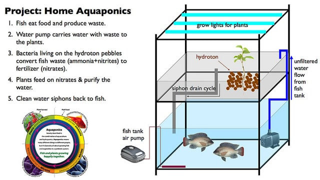 how aquaponics systems work