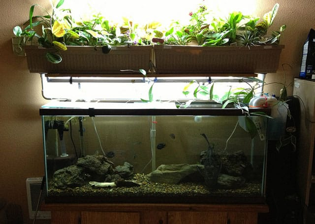 small indoor aquaponic garden