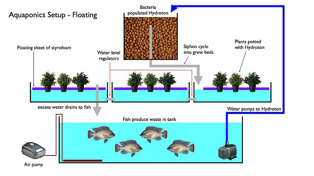 Diagram of Aquaponic basic system