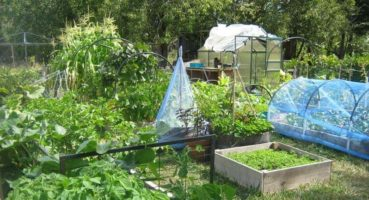 How to Get Started With Your Survival Garden