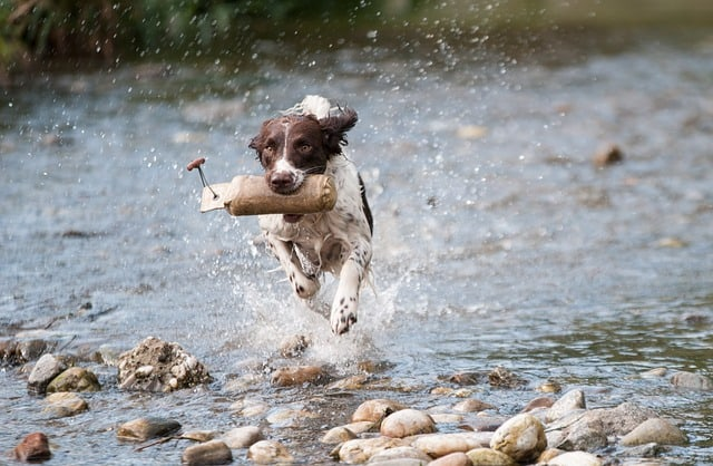 dog running through stream