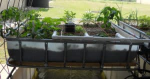 complete guide to aquaponics