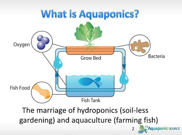 Januari 2019 | Diy Aquaponics Pdf