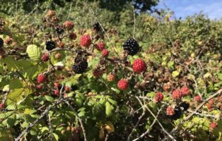 Foraging for Wild Food – The Nitty-Gritty on Gathering