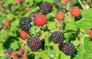 Tasty Greens: 11 Wild Edible Plants