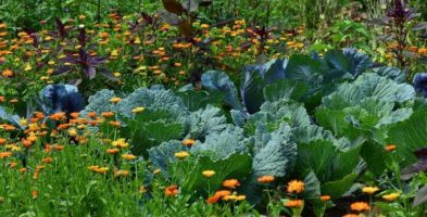 Get Cultured: Starting A Permaculture Garden