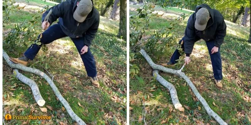 Chopping Beech Trees
