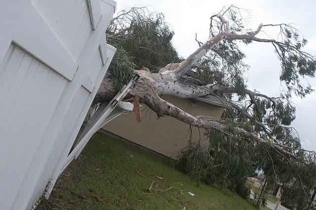 fallen tree damage from hurricane