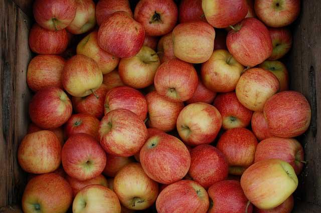 apples in root cellar
