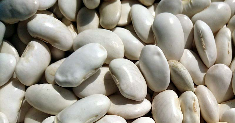 how to store dry beans